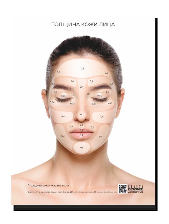 """Плакат """"Толщина кожи на лице"""""""