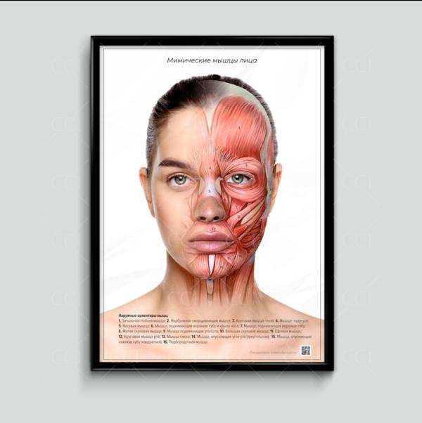 плакат косметолога